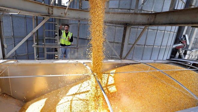 Alavaro Soto loads corn into a truck at The DeLong Co.'s grain elevator in Union Grove.