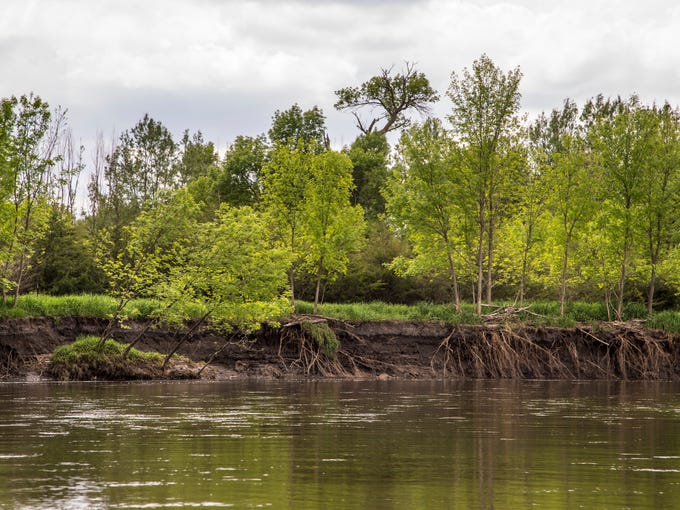 Trees fall into the Raccoon River as the river bank