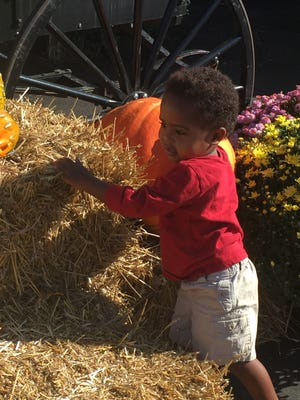 Bek Taylor, 2, of Franklin explores a display at Reed's Produce in downtown Franklin.