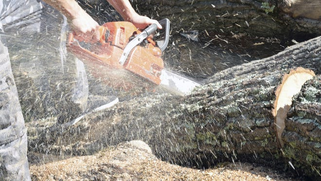 Stock photo of a man with a chainsaw cutting a tree.