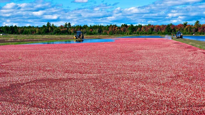 Nominations sought for WI Cranberry Board