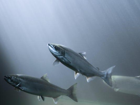 FishLimits