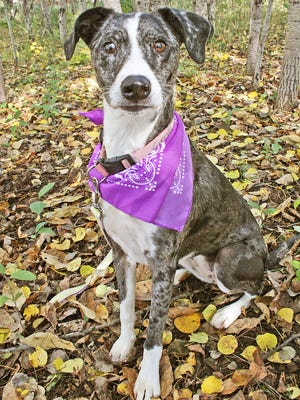 Rescue dog of the week: Laney
