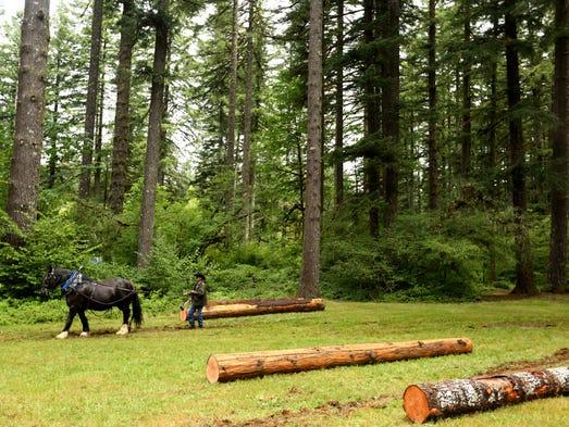 Tony Hendricks, of Sublimity, leads a draft horse logging