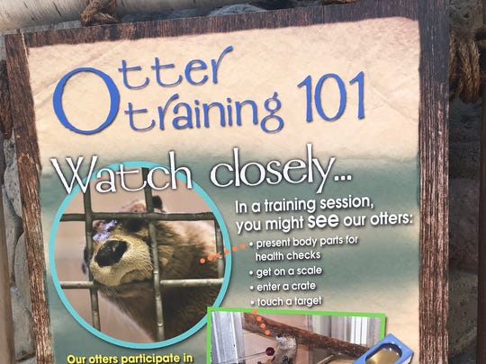 This sign outside the otter exhibit shows some of the