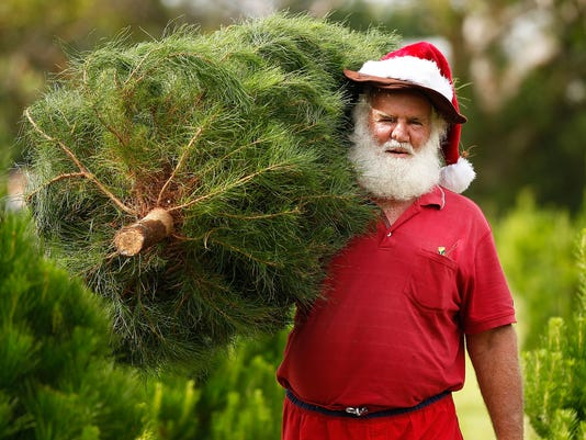 Sydneysiders Head To Sydney Christmas Tree Farm
