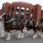 Budweiser drops Clydesdales from holiday ad campaign