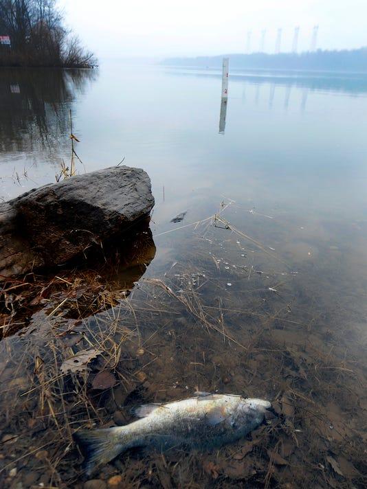 Susquehanna fish kill