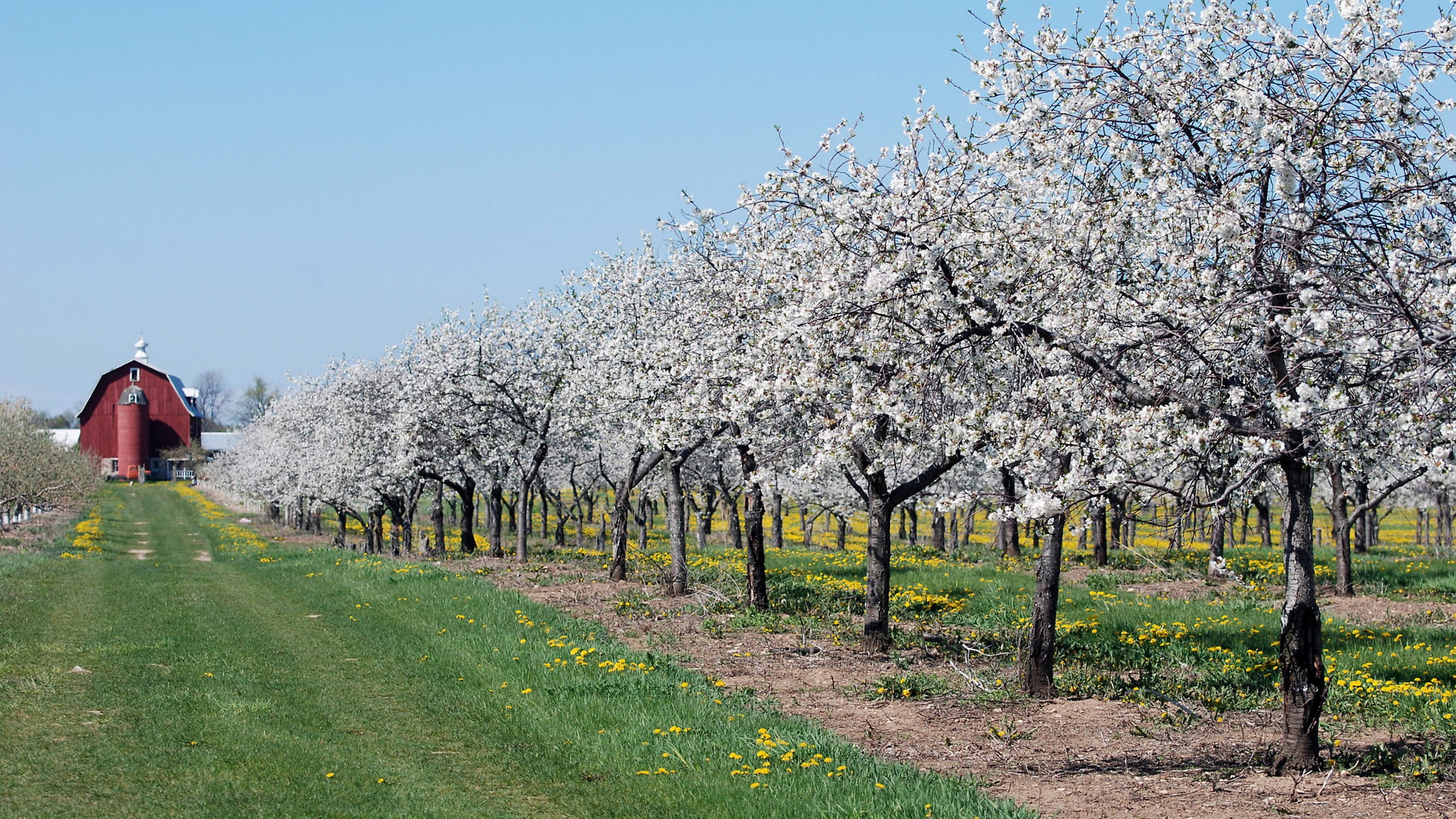 Door County Blossoms With Things To Do In Spring