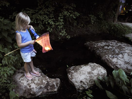 Warner Parks annual Insects of the Night program encourages