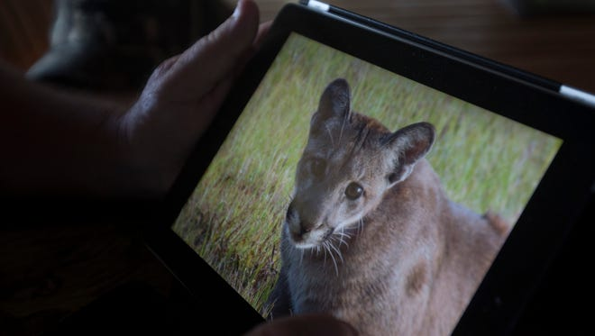 Cliff Coleman, the manager of the Black Boar Ranch in Hendry County holds a photo of a young panther he photographed on the ranch.