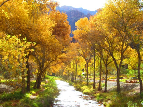 Fall colors can be seen along Bright Angel Creek at