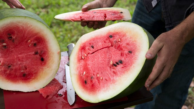 Farmer Will Crum and Greg Baker, of The Refinery and Fodder and Shine, taste their first Florida Favorite watermelon at the Crum Brothers Family Farm in Lakeland, FL.