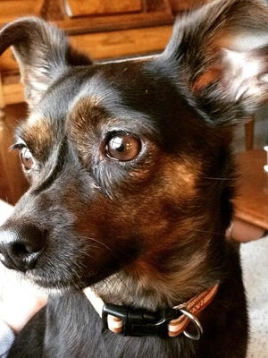Molly is a 2-year-old mix looking for a good home.