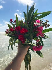 Oleanders have a class 4 toxicity level.
