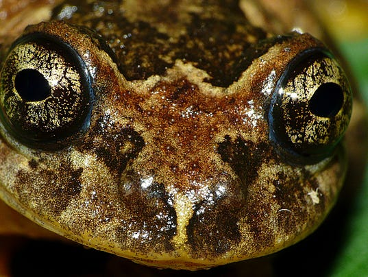 AP INDIA RETURN OF THE TREE FROGS I IND