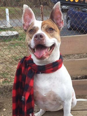 Adorabelle is looking for a home filled with love, play and consistency.