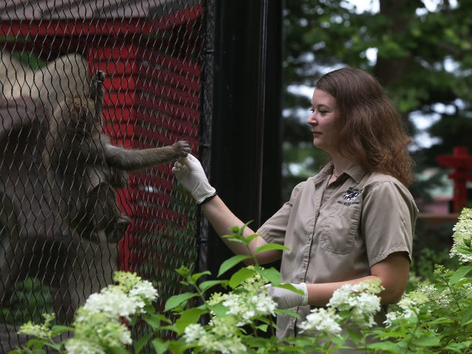 Kayla Stokes, an animal handler at Blank Park Zoo in Des Moines, treats Miya, a young Japanese macaque, to an almond on Saturday, July 26, 2014.
