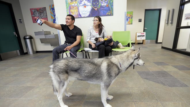A dog awaited adoption at the city's Animal Services shelter last year.