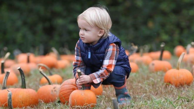 Silas Deurlein picks out a pumpkin during his day at Honeysuckle Hill Farms