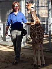 Animal keeper Diane Brabec pets the newborn male giraffe at the Living Desert on Monday. The baby giraffe is scheduled to be on display Friday.