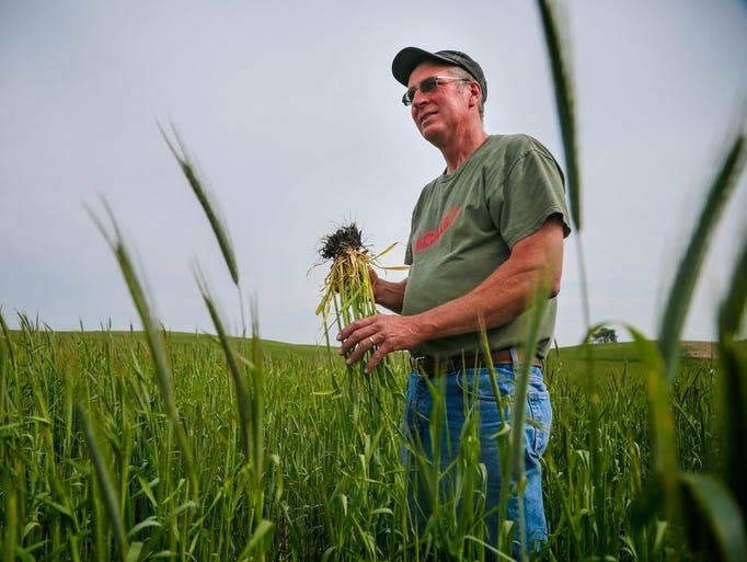 Farmer John Boettcher stands in a field of cereal rye