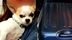 A Chihuahua was found accidentally packed inside a suitcase at LaGuardia Airport on Tuesday
