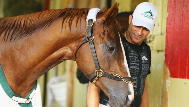 Kentucky Derby and Preakness winner California Chrome, with exercise rider Willie Delgado is walked in his barn after training on the main track at Belmont Park on May 30. The Triple Crown hopeful also schooled in the starting gate