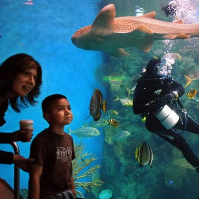 This is what a zebra shark looks like. A boy and his