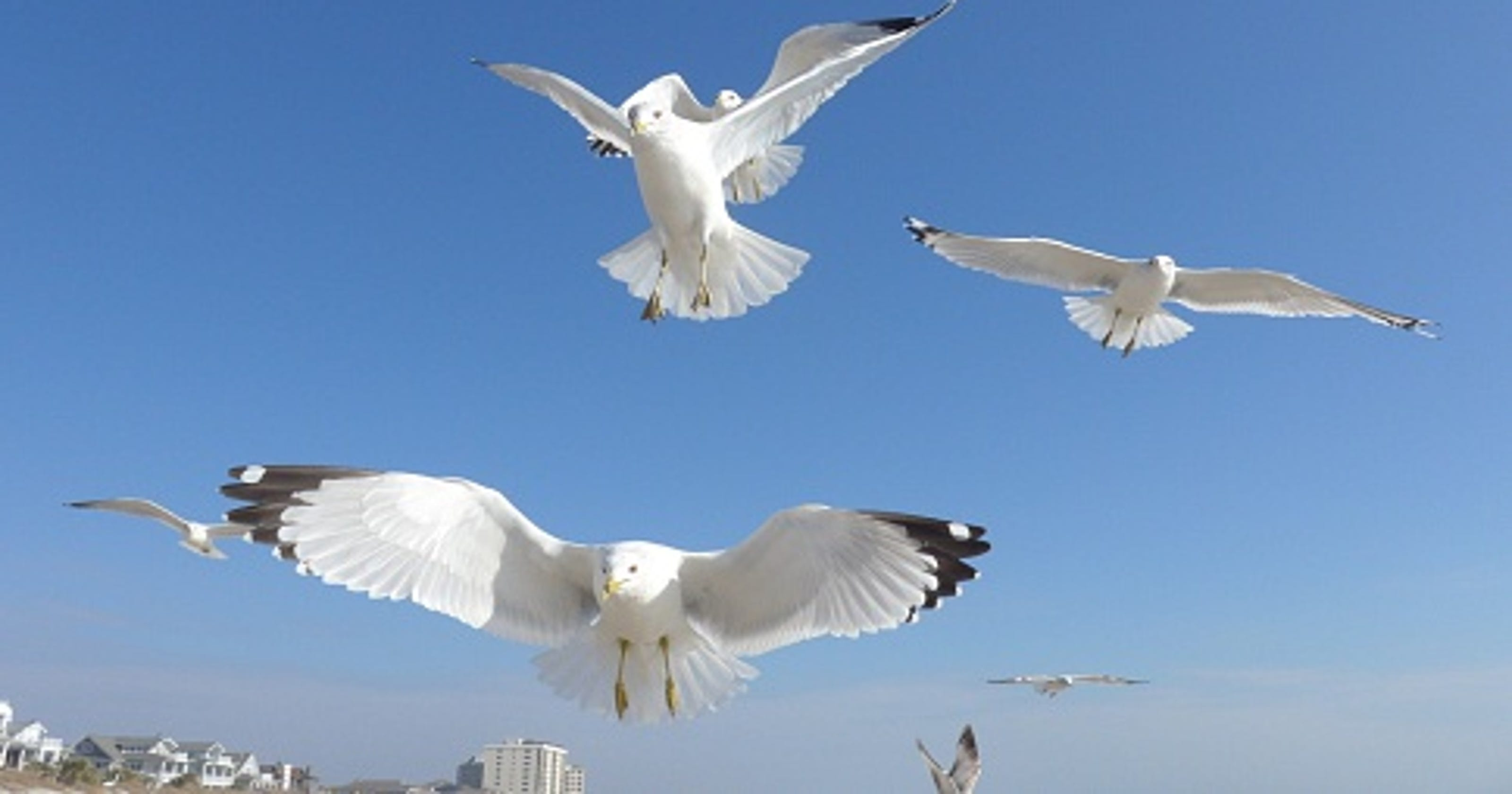 Michigan Man Arrested for Chasing Seagulls Naked