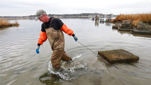 "In this Thursday, Feb. 23, 2017 photo, oysterman, Chris Ludford, drags an oyster cage to deeper water on his leased oyster beds on the Lynnhaven River in Virginia Beach, Va. As the shellfish makes a comeback, a modern-day oyster war is brewing, this time between wealthy waterfront property owners and working-class fishermen. ""These people can't have it all,"" said Ludford."