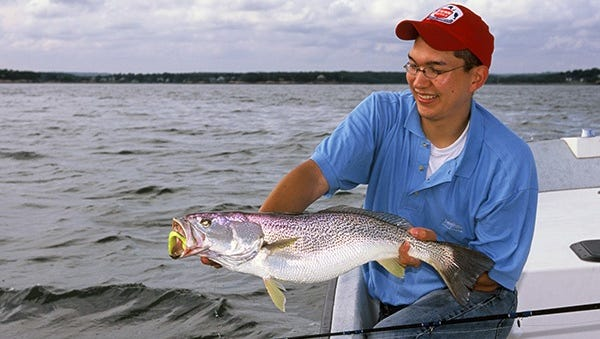 This angler shows a good-sized Northern weakfish, which is closely related to our spotted seatrout, also a weakfish. The Northern variety features hundreds of small  spots on its entire body. It migrates into southern waters during the winter months including the middle turning basin at Port Canaveral.