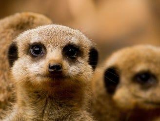 Travel photos: Beautiful animals from around the world
