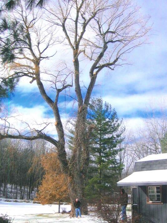 best-winter-tree-with-larry.jpg