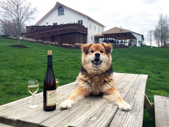 Snickers loves the lawn at Mallow Run Winery in Bargersville.