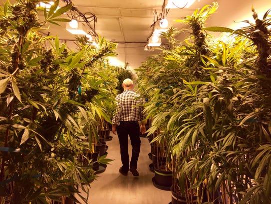 A marijuana researcher walks though a grow warehouse