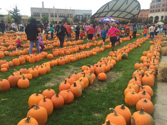 Rows of pumpkin at The 400 Block for Harvest Fest on