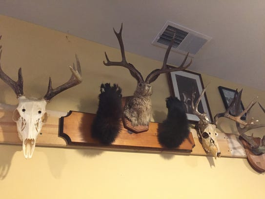 People have been dropping off hunting mounts and taxidermy