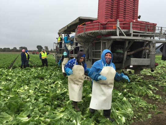 Female farm workers in autumn 2016.