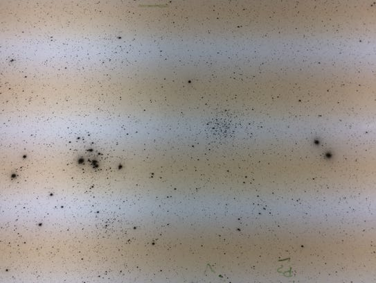 A portion of a photographic plate Lowell astronomers