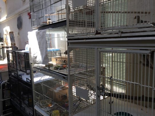 Baby animals wait in cages at East Ridge Animal Hospital