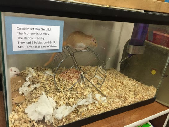Sandy Tams keeps gerbils in her Sioux Falls Lutheran