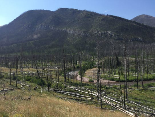 A large burn area found in the Bob Marshall Wilderness