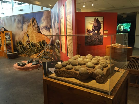 A nest of 26 real hadrosaur eggs are part of the 'Tiny