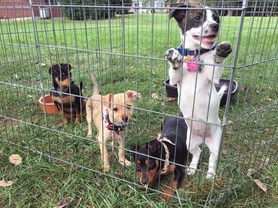 Pups from Butler County's Animal Friends Humane Society,