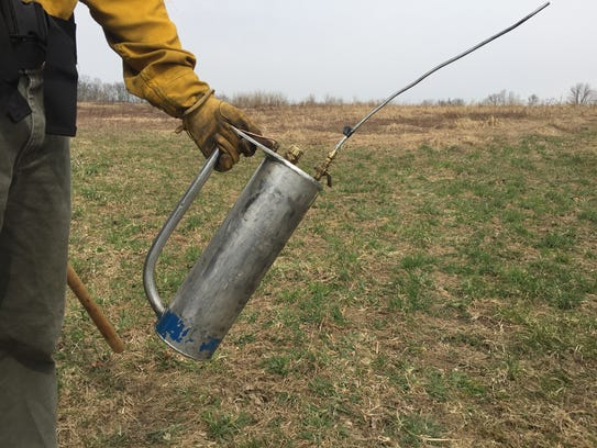 A drip torch which releases a gas/diesel mixture to set a thin, wavy pattern of fire along the edge of a field to start a prescribed burn.