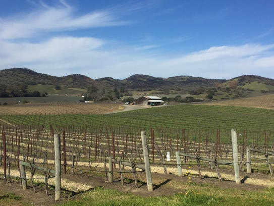 In the Carneros region of southern Napa Valley, vines