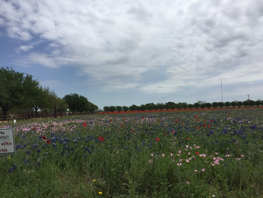 Flowers stretch as far as the eye can see at Wildseed