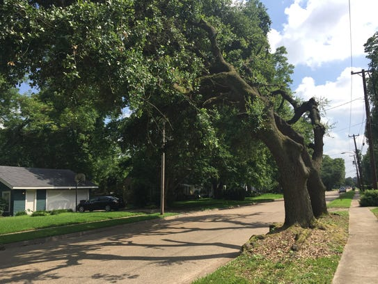 Residents Say Swepco Butchered Their Trees