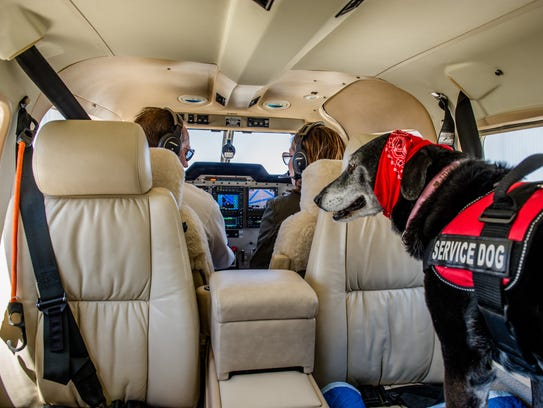 Lilly is very comforting to patients on Angel Flights,